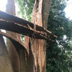 Tree take down in Corsham– with just a tad more of a challenge than usual