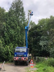 Dismantling a storm-damaged tree using our 26m MEWP
