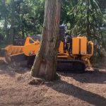 Stump Grinding in Devizes