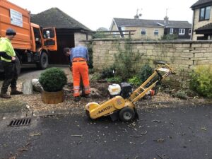 walnut tree take down tidy up